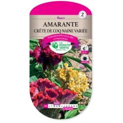 AMARANTE CRETE DE COQ NAINE VA cat2