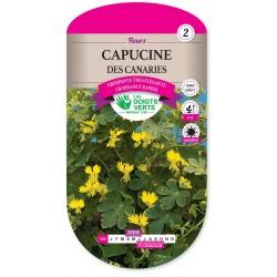 CAPUCINE DES CANARIES cat2
