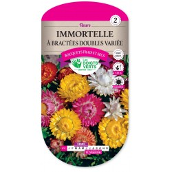 IMMORTELLE A BRACTEES DOUBLE VARIEE  cat2