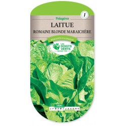 LAITUE ROMAINE BLONDE MARAICHERE