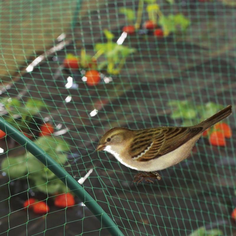 Filet protection oiseaux 8x10m pole vert montauban - Filet protection oiseaux ...