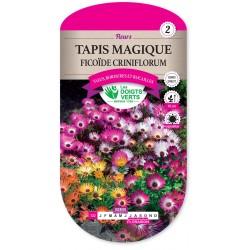TAPIS MAGIQUE FICOÏDE CRINIFLORUM cat2