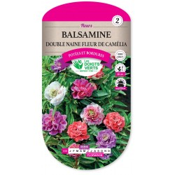 BALSAMINE DOUBLE NAINE FLEUR DE CAMELIA cat2