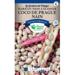 HARICOT NAIN À ÉCOSSER COCO DE PRAGUE NAIN 250G