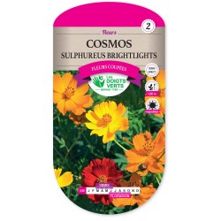 COSMOS SULFUREUS-BRIGHTLIGHTS CAT2